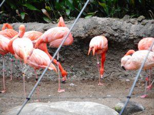 のいち動物公園2